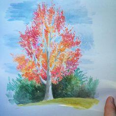 A closer look. #sketch #fallcolor #tree #SantaCruz #watercolor