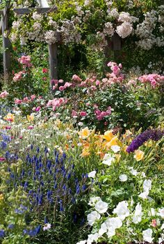 "Planning a Cottage Garden does not take a lot of work, but will take any inspiration and creativity. A Garden Cottage is whimsical and naturalistic, and it speaks to you, ""Come, stroll, stay awhile."" A good cottage garden plan will incorporate many elements, including a butterfly garden, curved paths, quiet sitting areas, seasonal plants. Credit: Judy's Cottage Garden Blog"