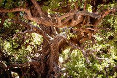I think it looks like a Disney tree