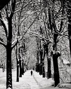 Winter Scene, 1960s. by Josef Sudek