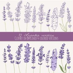 Lavender Tattoo on Pinterest | Wildflower Tattoo, Tattoos and body ...