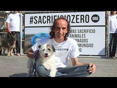 La protectora El Refugio empieza a recoger 50.000 firmas para evitar que se sacrifiquen perros y gatos abandonados en Madrid #sacrificiozero