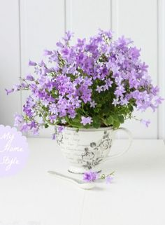 pretty flowers in a teacup: