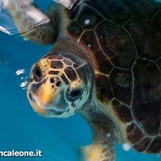 """Il Centro recupero tartarughe marine (Crtm) di Brancaleone nasce nel 2006 grazie al progetto Life Natura """"Tartanet"""" realizzato dalCentro turistico student"""