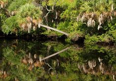 James Grey Preserve: Wilderness in the Heart of New Port Richey  #Florida #Nature #Outdoors