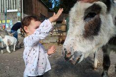 tamar-valley-donkey-park-stroking