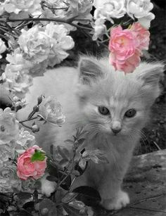 Cottage Charm ~ Pink, Gray & White ~ Black and white photography with pink color splash Splash Photography, Black And White Photography, Animal Photography, Contrast Photography, Photography Flowers, Photography Ideas, Black And White Love, Black And White Pictures, Pretty Cats