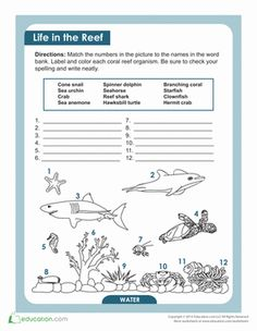 Savage Shark Sheet! | Worksheets, Sharks and Science Worksheets