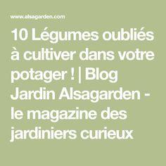 10 Légumes oubliés à cultiver dans votre potager !   Blog Jardin Alsagarden - le magazine des jardiniers curieux