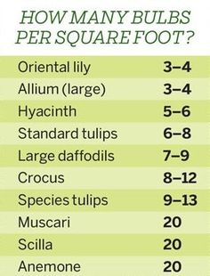 For a full-blooming bulb garden, follow our calculation for how many bulbs to plant per square foot.