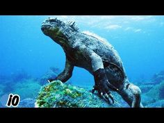 Godzilla-like Sea Creature Discovered Underwater Rare Species, Sea Creatures, Godzilla, Underwater, Youtube, Animals, Animales, Animaux, Under The Water