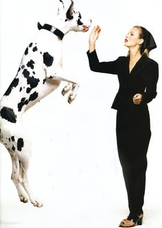 what kind of idiot gets their dane to jump that way!?!?! that can cause bloat!!!!!!!!