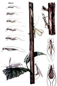treecricket.gif (436×655)