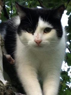Lady Cat | Pawshake Headingley, leeds
