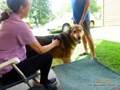 Our Awesome Travels: Getting more stuff done and more doggie fixes for ...
