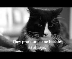 video -- Henri the Cat Expresses Dissatisfaction With Vet  made like '60s french existentialist film --LOL