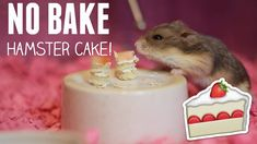 NO BAKE HAMSTER CAKE DIY