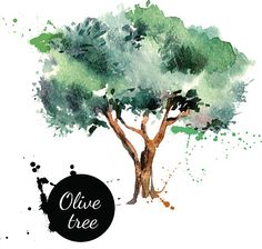 Olive tree vector illustration. Hand drawn watercolor painting o