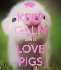 KEEP CALM AND LOVE PIGS. Another original poster design created with the Keep Calm-o-matic. Buy this design or create your own original Keep Calm design now. This Little Piggy, Little Pigs, Cute Baby Animals, Funny Animals, Farm Animals, Cute Baby Pigs, Baby Piglets, Vegan Animals, Beautiful Creatures
