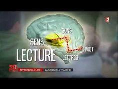 Mon cerveau à l'école Psychologie Cognitive, Education Positive, Lectures, Journal, Challenges, Learning, School, Cycle 2, France 2