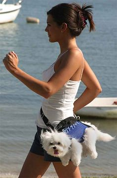 Banish FOMO forever with a fanny pack. | 15 Invaluable Lifehacks Every Dog Should Know