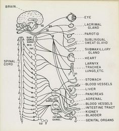 Neuro this is sooo cool
