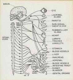 Neuro... this is sooo cool