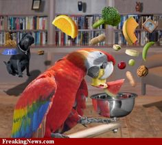 Zero Gravity Parrot
