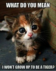Cute Animals Coloring Pages Free Cat Disowning Kittens Over Cute Animals Gif Fr Animals Animals Baby Animals Funny Funny Animal Photos Funny Animals