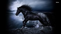 Black horse on the cliff