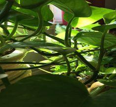 house plants backgrounds