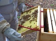 Resultado de imagen para honeycomb frame holder