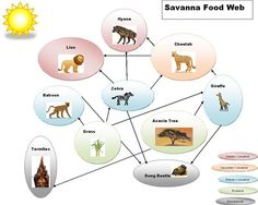 grassland biome food web with trophic levels