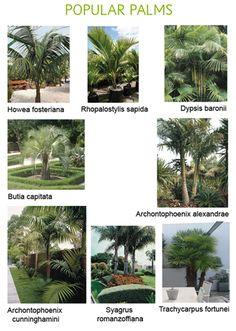 Popular palms Palm Garden, Tropical Garden, Landscape Architecture Design, Landscape Plans, Garden Design Plans, Planting Plan, Christmas Arrangements, Beach Shack, Front Yard Landscaping