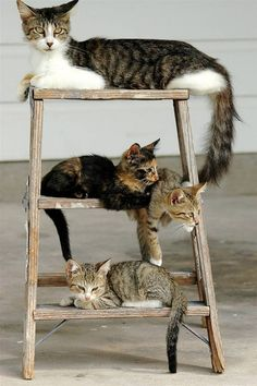 Three kittens with mom on a small ladder on the porch in Harlingen, Texas. (Gabe Hernandez / AP)