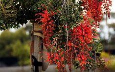 10 best Botanics of Australasia images in 2016 | Planting