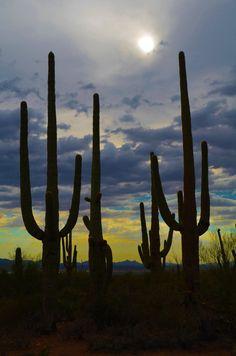 Saguaro por Noche by rosalindmarshall114 on Etsy