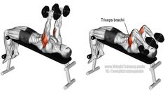 Triceps - Hit your triceps brachii hard with the decline dumbbell triceps extension, an isolation and push exercise. There are no synergistic muscles. Best Chest Workout, Chest Workouts, Gym Workouts, Fitness Gym, Muscle Fitness, Corps Fitness, Workout For Flat Stomach, Weight Training Workouts, Muscle Training