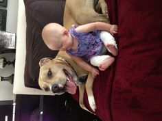 Pit bull and baby B