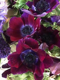 Natural Bouquet, Spring Flowers, Nature, Plants, Flora, Nature Illustration, Off Grid, Plant, Mother Nature