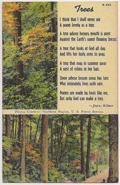 Trees Poem by Joyce Kilmer, vintage postcard.  My favorite poem......and a beautiful card.
