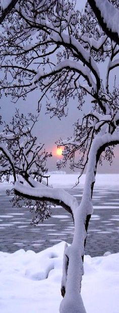 Beauty of Fallen snow with sunsets