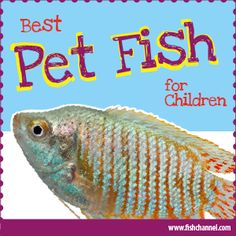 List Of Good Beginner Fish Species For Children Or First Time Fishkeepers Kids Aquarium