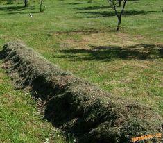 Záhradkárka prišla s perfektnou vychytávkou na pestovanie zemiakov bez práce: Keď to uvidíte, pokosenú trávnu už nikdy nevyhodíte!