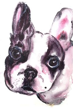 wotercolor Boston Terrier, French Bulldog, Watercolor Paintings, Dogs, Animals, Boston Terriers, Animales, Water Colors, Animaux