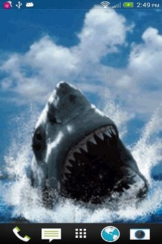 Shark Attack Live Wallpaper free app download - Android Freeware