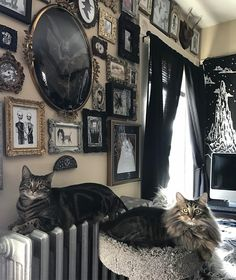 "1,950 Likes, 25 Comments - Chandra GoreWitch ✨ (@lifeisapigsty) on Instagram: ""Here's another picture of my kitties in front of this wall ✨"""