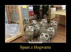 Harry Potter Spells Reparo not Harry Potter Owl Name, Harry Potter Memes Dumbledore And Voldemort Harry Potter Film, Harry Potter Humor, Fans D'harry Potter, Harry Potter Spells, Potter Facts, Harry Potter Characters, Harry Potter World, Voldemort, Thomas Brodie Sangster