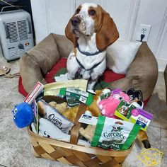 Advent Day This one isn't about what I'm getting but what I'm giving. These goodies went to a bunch of my puppy. Basset Hound, Giving, Grain Free, Advent, Goodies, Puppies, The Originals, Stuff To Buy, Sweet Like Candy
