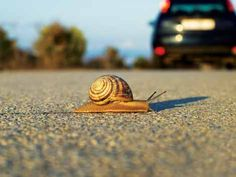 Slow movement: fazer melhor e devagar A filosofia do slow movement Bem-estar e saúde Terapias
